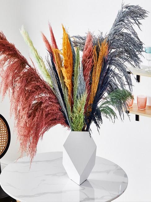 Pampasgras in vielen bunten Farben auf Tisch