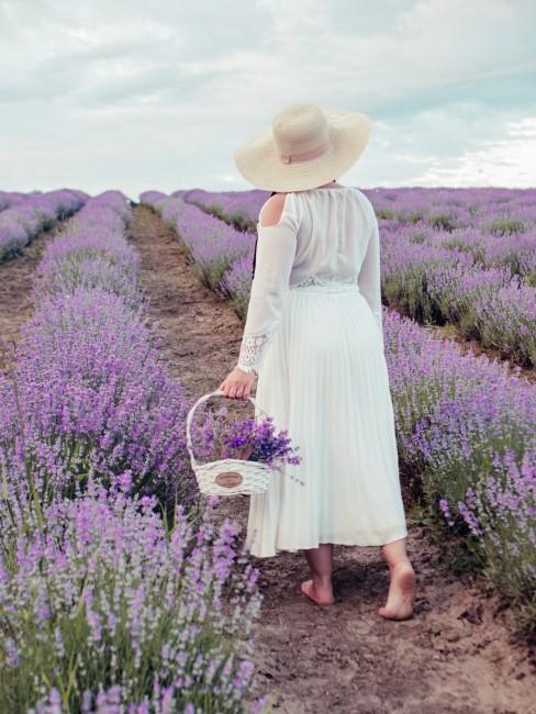 Frau bei Lavendel Ernte