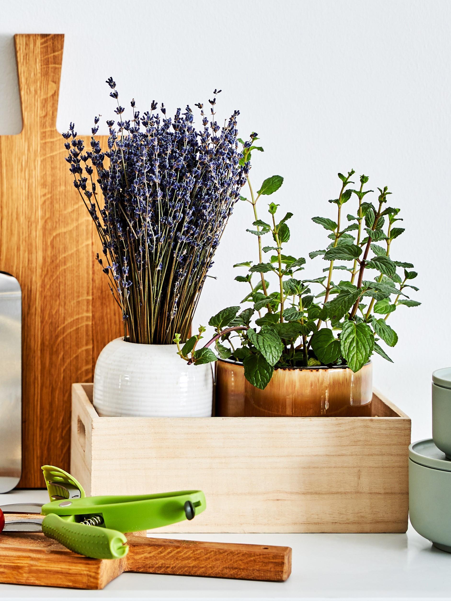 Lavendel in einer weißen Vase
