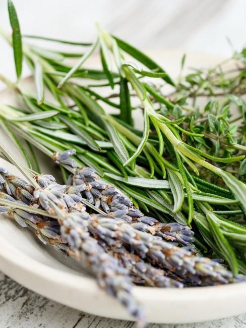 Lavendel mit Kräutern in einer Schale
