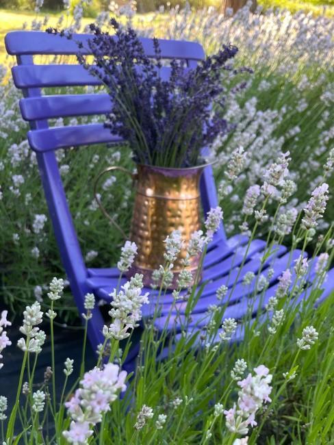 Lavendelstrauß in Metallkanne auf lila Stuhl