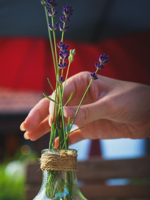 Lavendel in einer Glasflasche mit Schnur