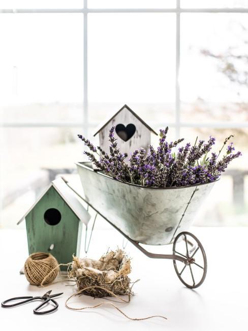 Lavendel in einer silber Schubkarre und Vogelhäuschen