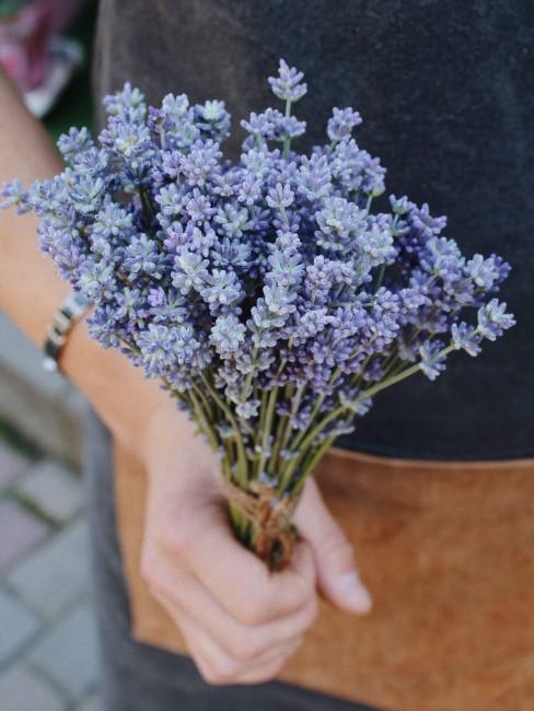 Lavendelstrauß in der Hand