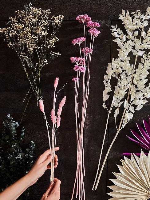 Verschiedene Trockenblumen Arten