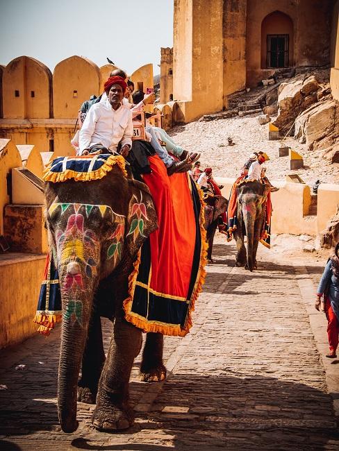 Mann auf einem Elefant
