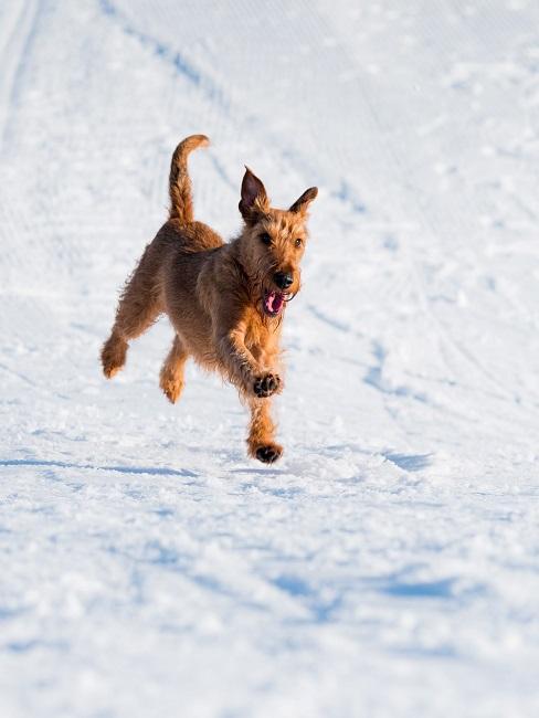 Urlaub mit Hund Schnee Berge