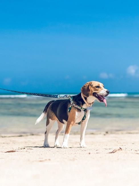Urlaub mit Hund Strand Leine Meer