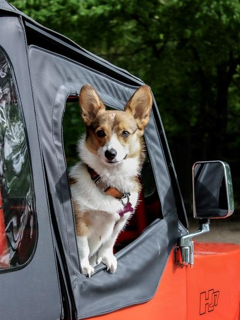 Urlaub mit Hund Hund im Auto Anfahrt Anreise