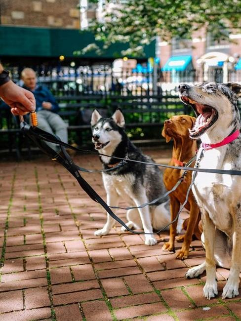 Urlaub mit Hund Hundesitter Leinen Gassi