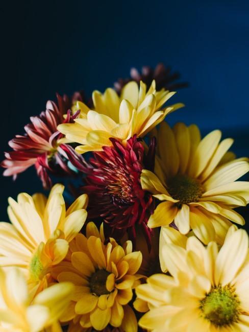 Herstblumen in Gelb und Rot