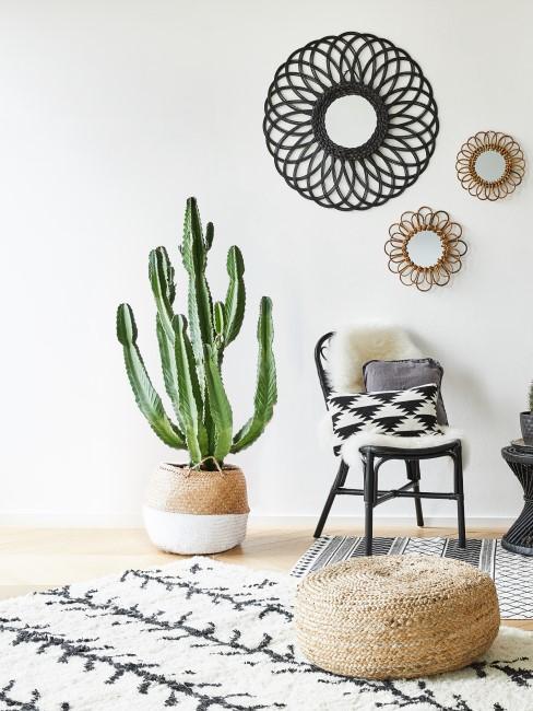 Kaktus als mexikanische Deko