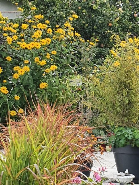 Herbstblumen und Gräser im Garten