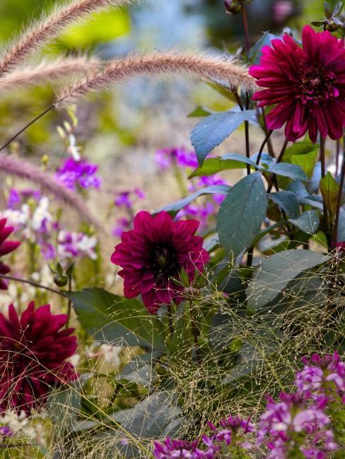 Rote Herbstblumen und Gräser
