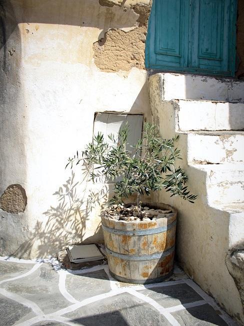 Mediterrane Pflanzen für die Einrichtung