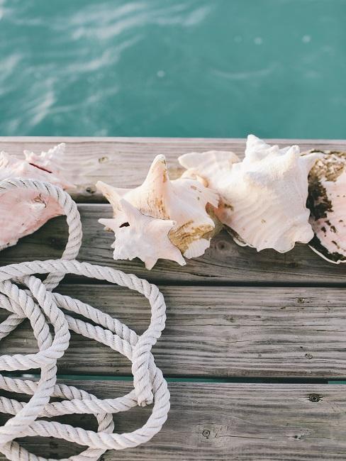 Muscheln und Seil