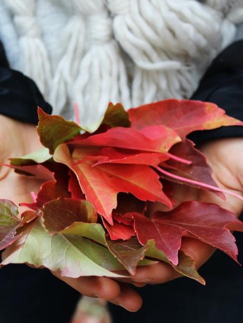 Buntes Herbstlaub für Herbstkranz