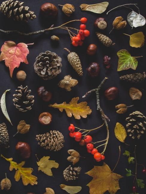Naturmaterialien für Herbstkranz