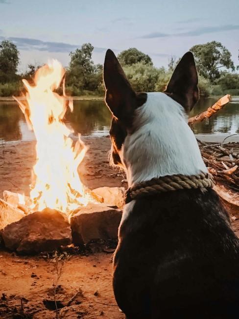 Hund am Lagerfeuer beim Camping mit Hund