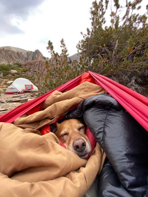 Hund beim Camping mit Schlafsack in der Hängematte