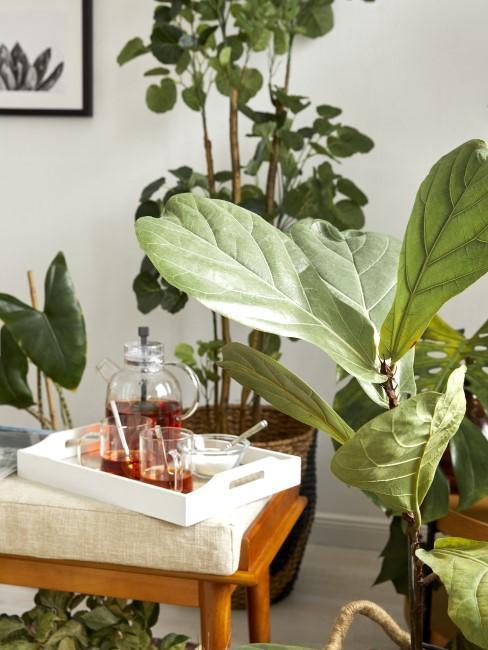 Pflanzen fürs Retro Wohnzimmer