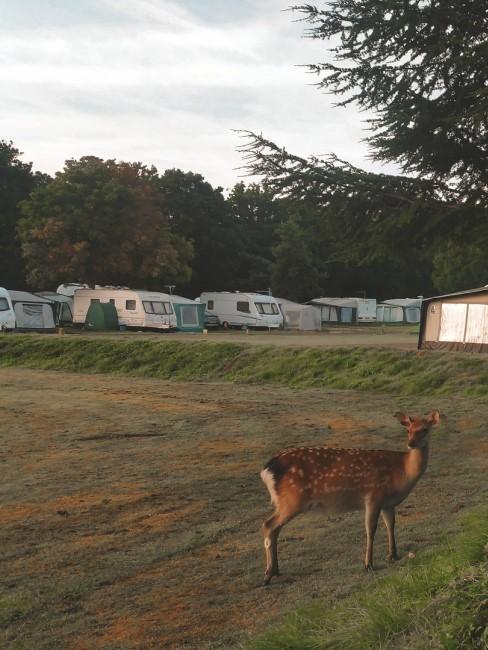 Campingplatz in der Natur mit Reh