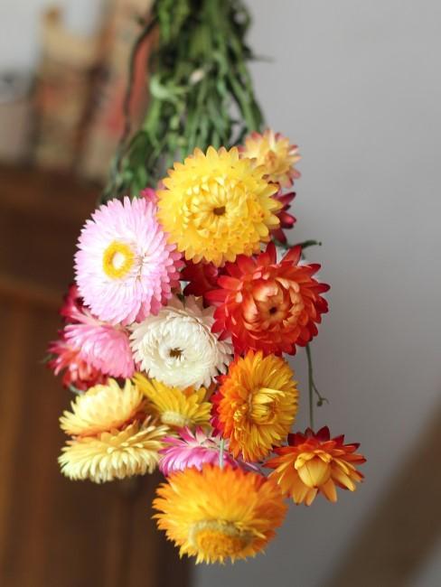 Blumen trocknen über Kopf aufgehängt