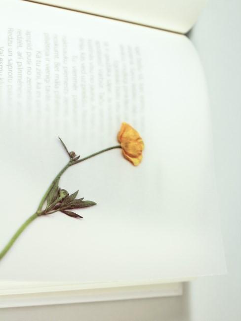 gepresste Blume in Buch