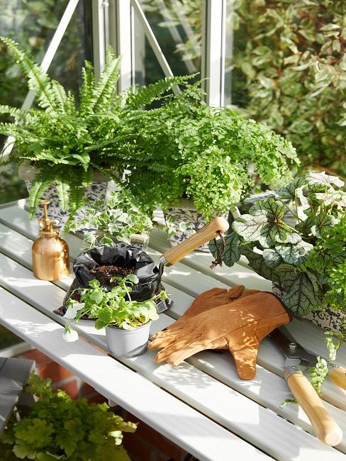 Pflanzen zum Umtopfen