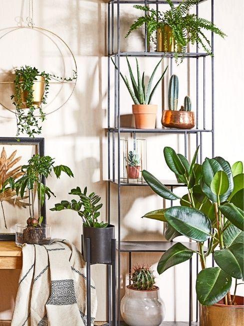 plantas de interior Westwing