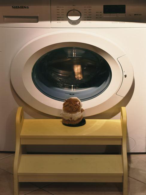 Hamster esperando frente a la lavadora