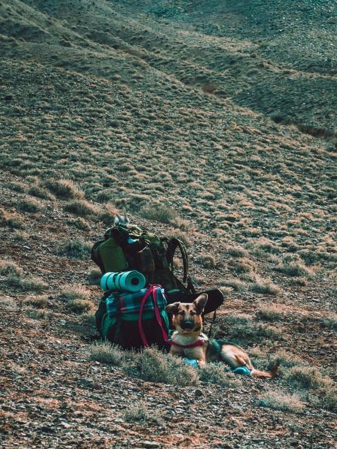 perro de senderismo con mochila