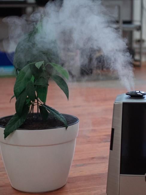 Purificador de aire con una planta