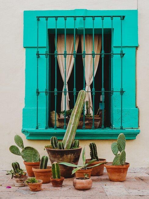 venatan turquesa con cactus delante