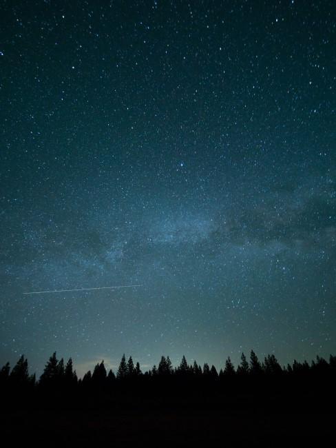 cielo con estrellas sobre un bosque