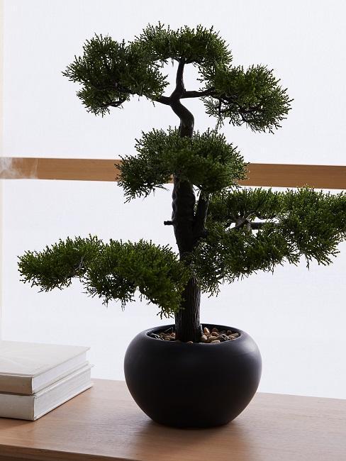 bonsai con macetero negro sobre madera