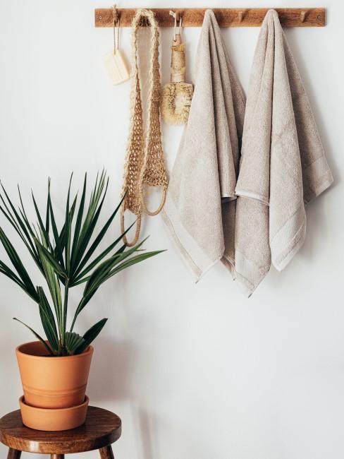 Planta y un colgador para toallas