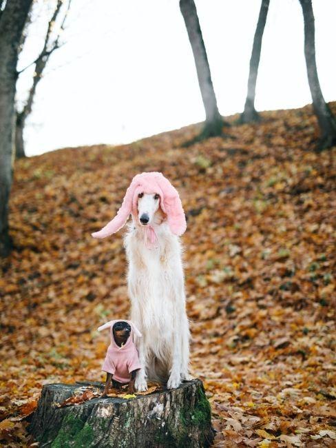 Perros disfrazados para carnaval en el campo