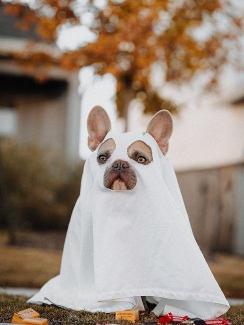 Bulldog francés disfrazado de fantasma en carnaval