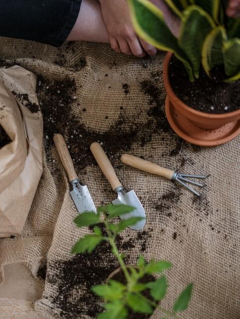 herramientas de jardinería con tierra