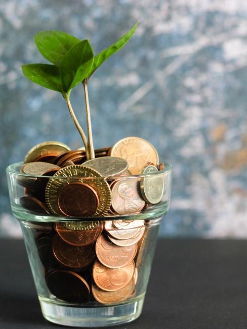 Planta con dinero en lugar de tierra