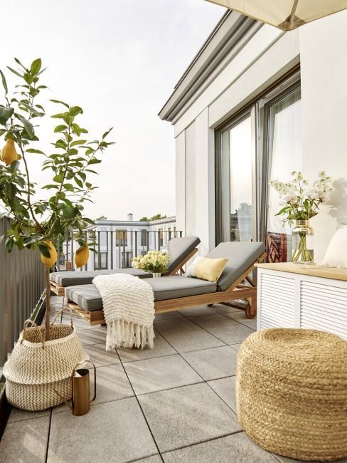Terraza decorada con un limonero y dos tumabanas