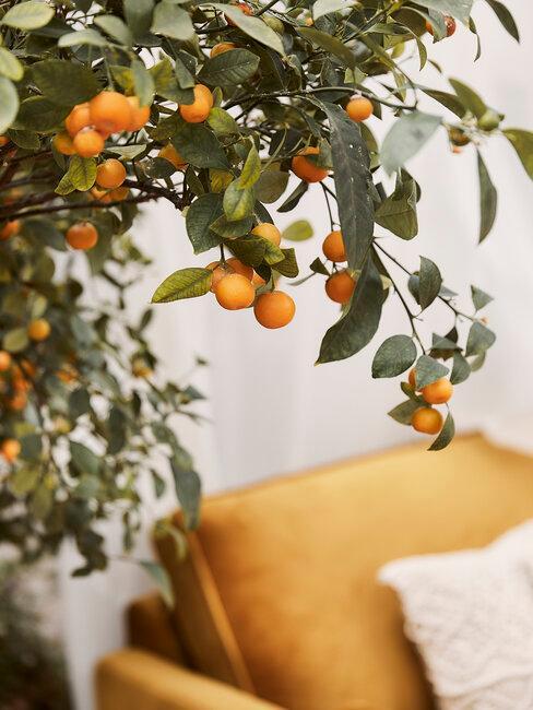 arbol y sofá naranja