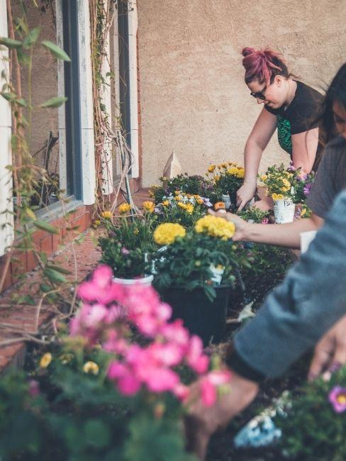 Mujer plantando flores amarillas y rosas