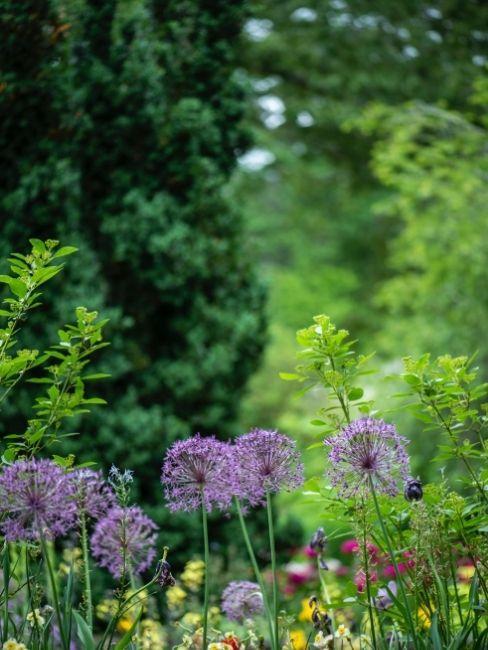 Flores violetas en el campo