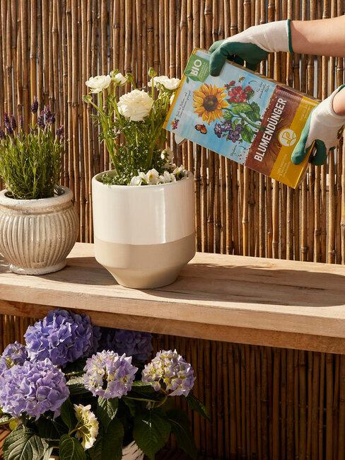 jardineria cuidado de plantas