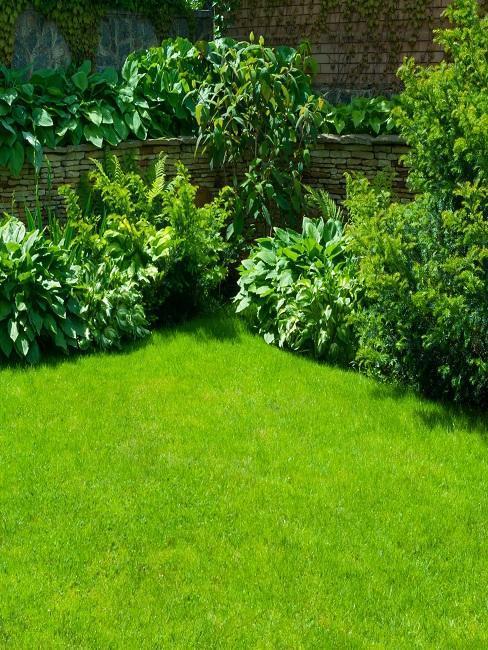 jardin natural