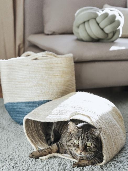 Gato metido en una cesta