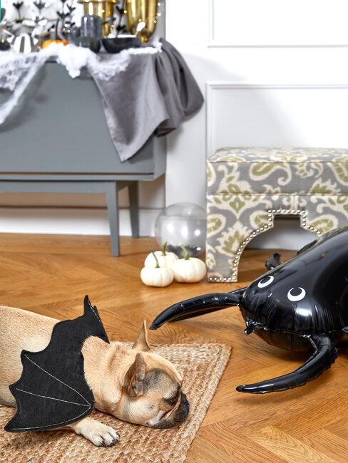 perro con disfraz de halloween