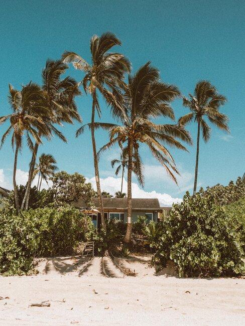 casa en pla playa con palmeras